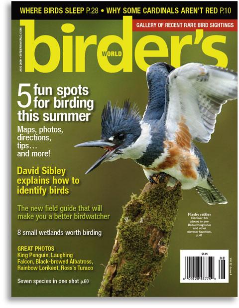 Kingfisher-by-Alan-Murphy
