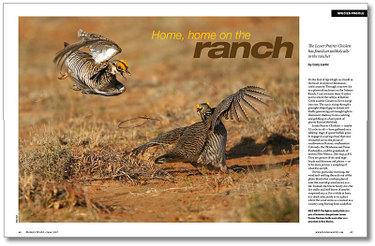 Prairiechickens04