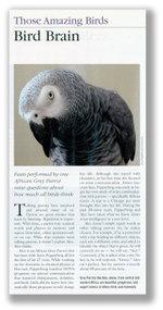 African_gray_parrot_alex