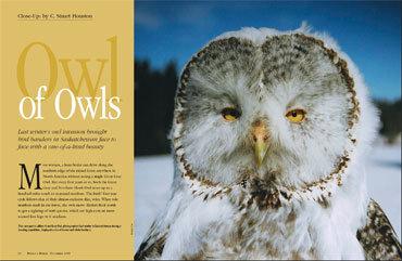 Owlofowls